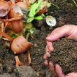 Projekt: Naučimo brinuti o okolišu