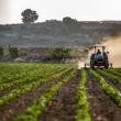 Javni natječaj za zakup poljoprivrednog zemljišta u vlasništvu Republike Hrvatske na području Grada Pakraca